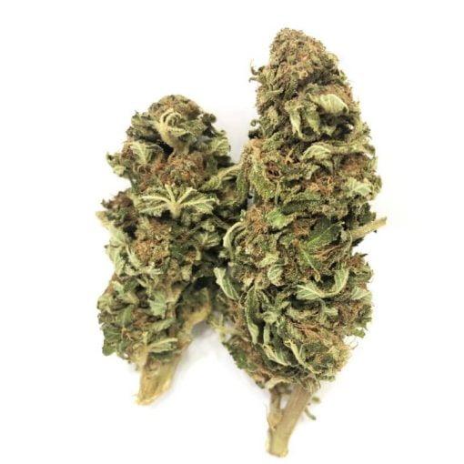 cogollo marihuana legal